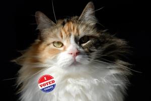 lefty says go vote