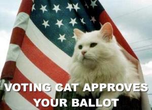 Voting-Cat